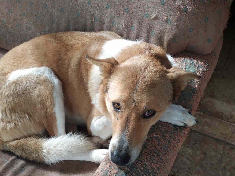 זיגי על הספה